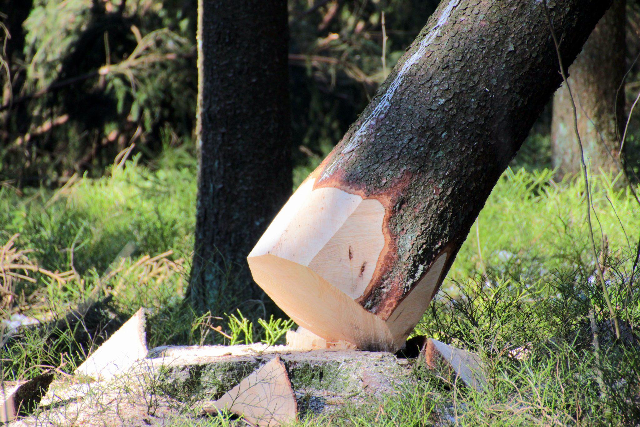 tree-1263801